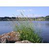 Lac de Saint Front