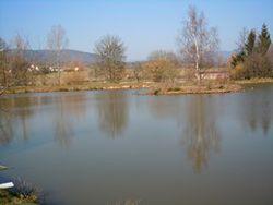 Les étangs les saules et les Aulnes