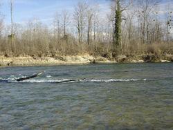 La Basse rivière d'Ain